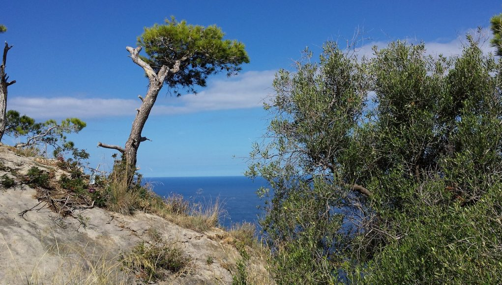 Le vent et les plantes du littoral
